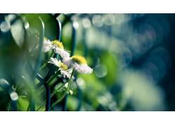 花卉,宏,植物,景深,雏菊,背景虚化338878图片