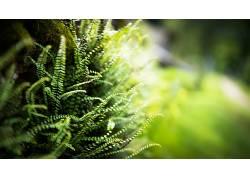 壁纸,蕨类植物,模糊,景深,植物,宏8447图片