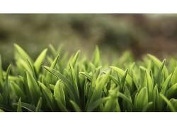 弹簧,草,壁纸,树叶,植物68788图片
