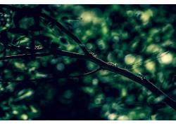 壁纸,蚂蚁,科,景深,植物377838