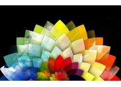 彩虹,花卉,黑色112589