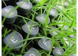 打字机,草,植物3165图片