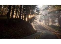 壁纸,路,树木,森林,太阳光线,科,植物,薄雾364930