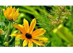 花卉,植物122831