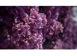 花卉,壁纸,九重葛,粉色的花朵,植物,树叶,特写8389