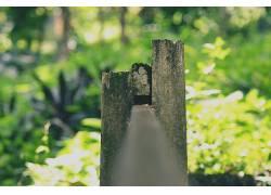 壁纸,阳光,木,蕨类植物,宏,景深,植物,背景虚化,青苔264226图片