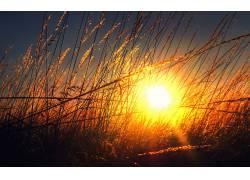 壁纸,阳光,植物,黄金时段70226图片