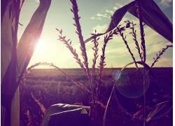 壁纸,阳光,植物70589图片