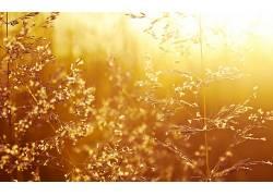 壁纸,阳光,植物72411图片