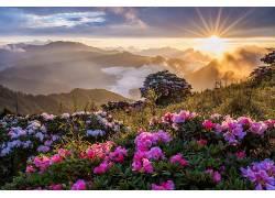 花卉,壁纸,山,日落,日出,薄雾679643
