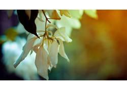 花卉,壁纸,景深,植物116050图片