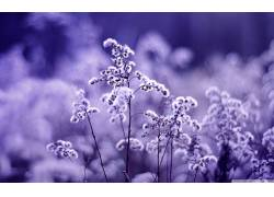 宏,花卉,壁纸,背景虚化,摄影,植物230983