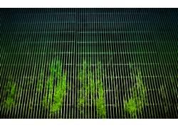 格,草,植物410图片