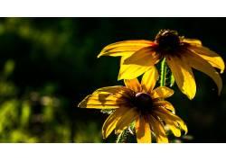 花卉,黄花,壁纸,背景虚化,花园558125