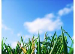 草,景深,天空,宏,植物,云,蠕虫的眼睛视图3171图片