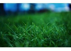 草,景深,植物15048图片