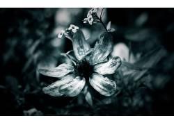 花卉,数字艺术,植物2542图片