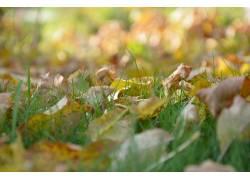 草,树叶,植物89050图片