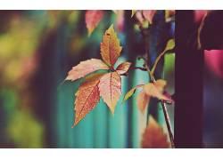 宏,树叶,壁纸,植物,篱笆101242图片