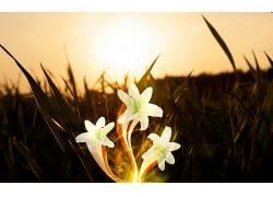 花卉,数字艺术,阳光,植物25771图片