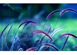 草,植物,小穗280366图片