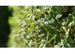 草,植物,布什475313图片