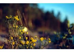 花卉,景深,壁纸,植物3222图片