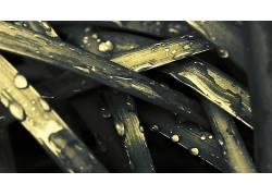 草,植物,水滴94667图片