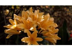 花卉,壁纸,背景虚化,植物,黄色的花朵259305