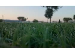 草,植物,蠕虫的眼睛视图62667图片
