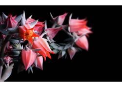 红色的花朵高清图片