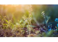 宏,壁纸,景深,植物137345图片