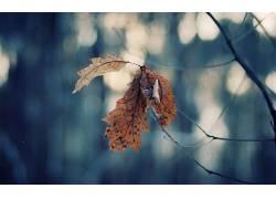 宏,壁纸,树叶,植物113852图片