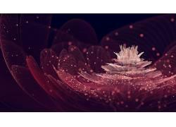 花卉,抽象,分形,分形花,数字艺术,植物13560图片