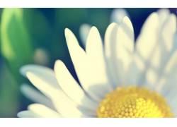 花卉,绿色,黄色,白色37107