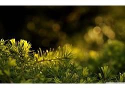 宏,壁纸,背景虚化,植物,景深230965