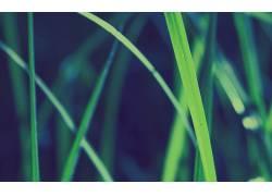 草,壁纸,景深,宏,植物23711图片