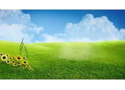 草,壁纸,蒲公英,花卉,数字艺术,天空386329图片