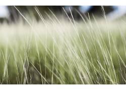 宏,壁纸,草,景深,植物231161图片