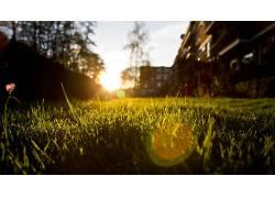 草,壁纸,阳光,景深,日落,摄影,背景虚化,镜头光晕,特写,植物13606图片