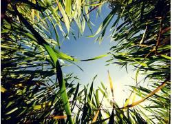 草,宏,壁纸,植物,蠕虫的眼睛视图360261图片