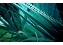 草,宏,植物,壁纸3228图片
