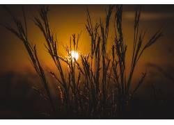 宏,太阳,壁纸,植物342473图片