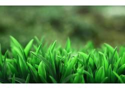草,宏,植物,模糊,壁纸15762图片