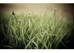 草,宏,植物121892图片