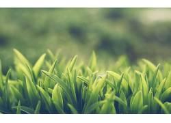 草,宏,植物28963图片