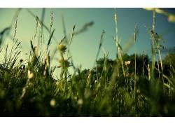 草,景深,壁纸,植物23704图片