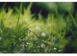 草,植物389004图片