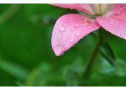 花卉178235