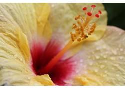 花卉,特写393410